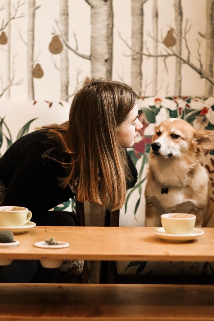 Szavazni lehet az év kutyabarát helyére